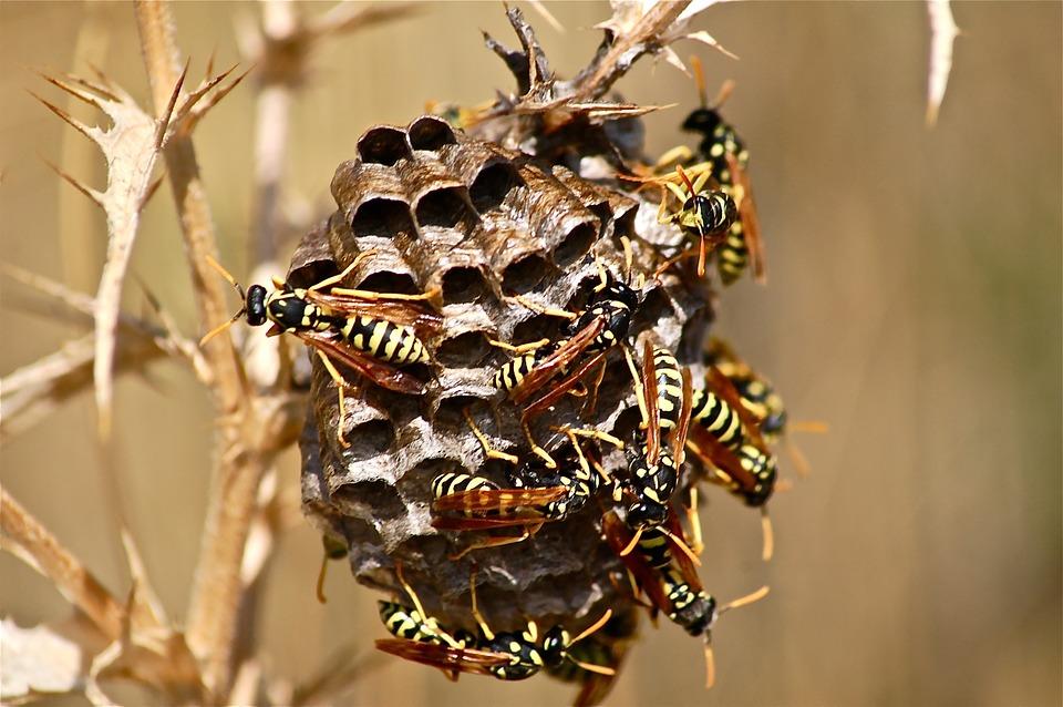 Comment détruire un nid de guêpe?